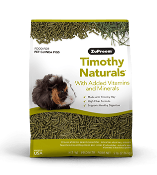 Timothy Hay Food for Guinea Pigs