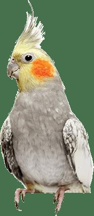 Bird's nutritious requirement