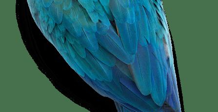Toxic Foods Your Bird Should Never Eat