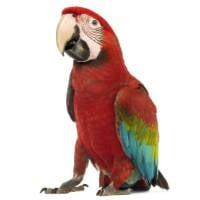 Bird Food for Macaws