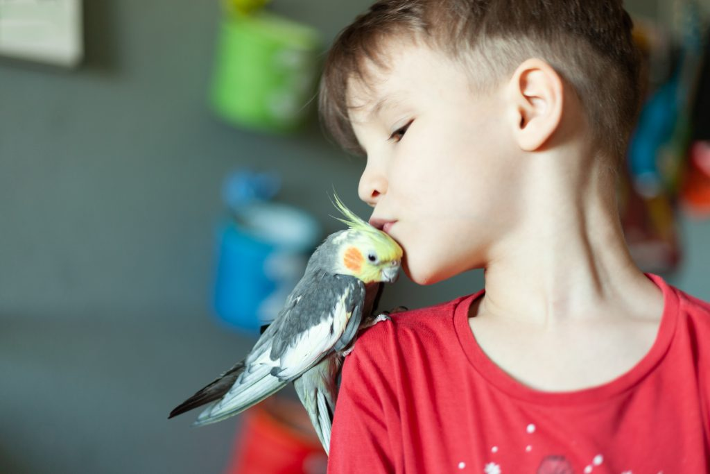 Bonding with Pet Birds