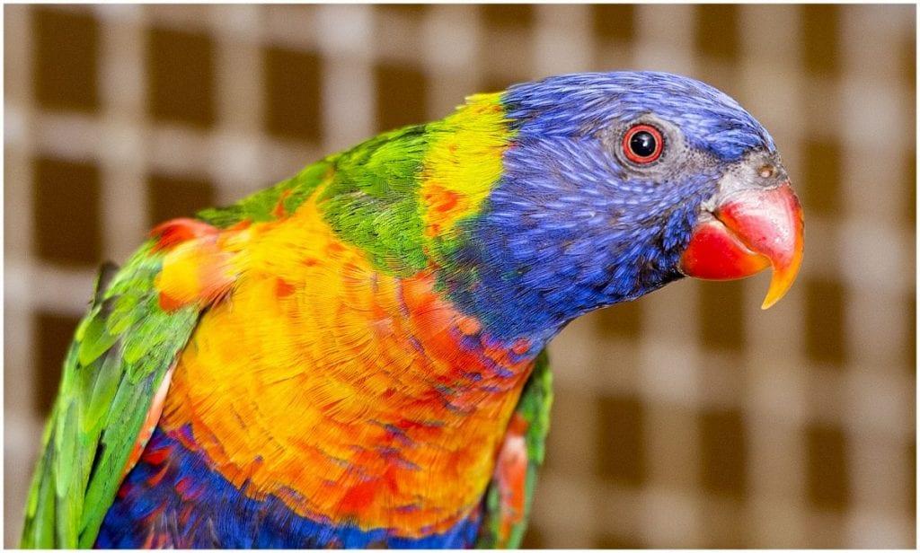 Preparing Your Bird For Travel