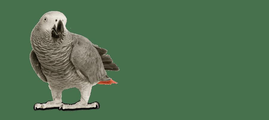 best-bird-food-for-parrots