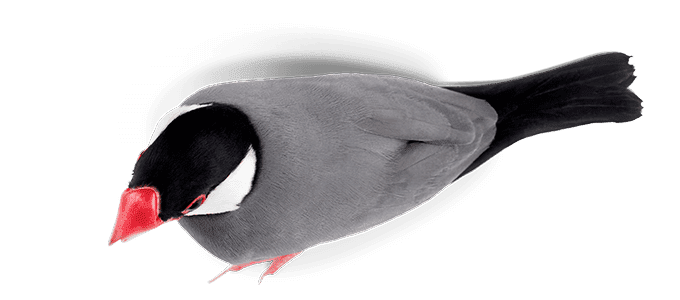 Best bird food seed for finches