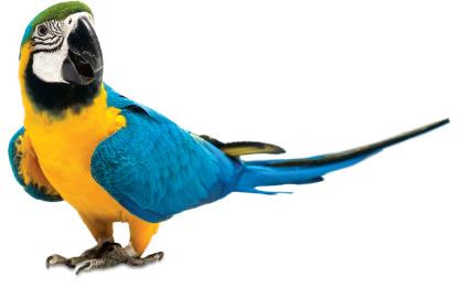 Best diet for macaws and large pet birds