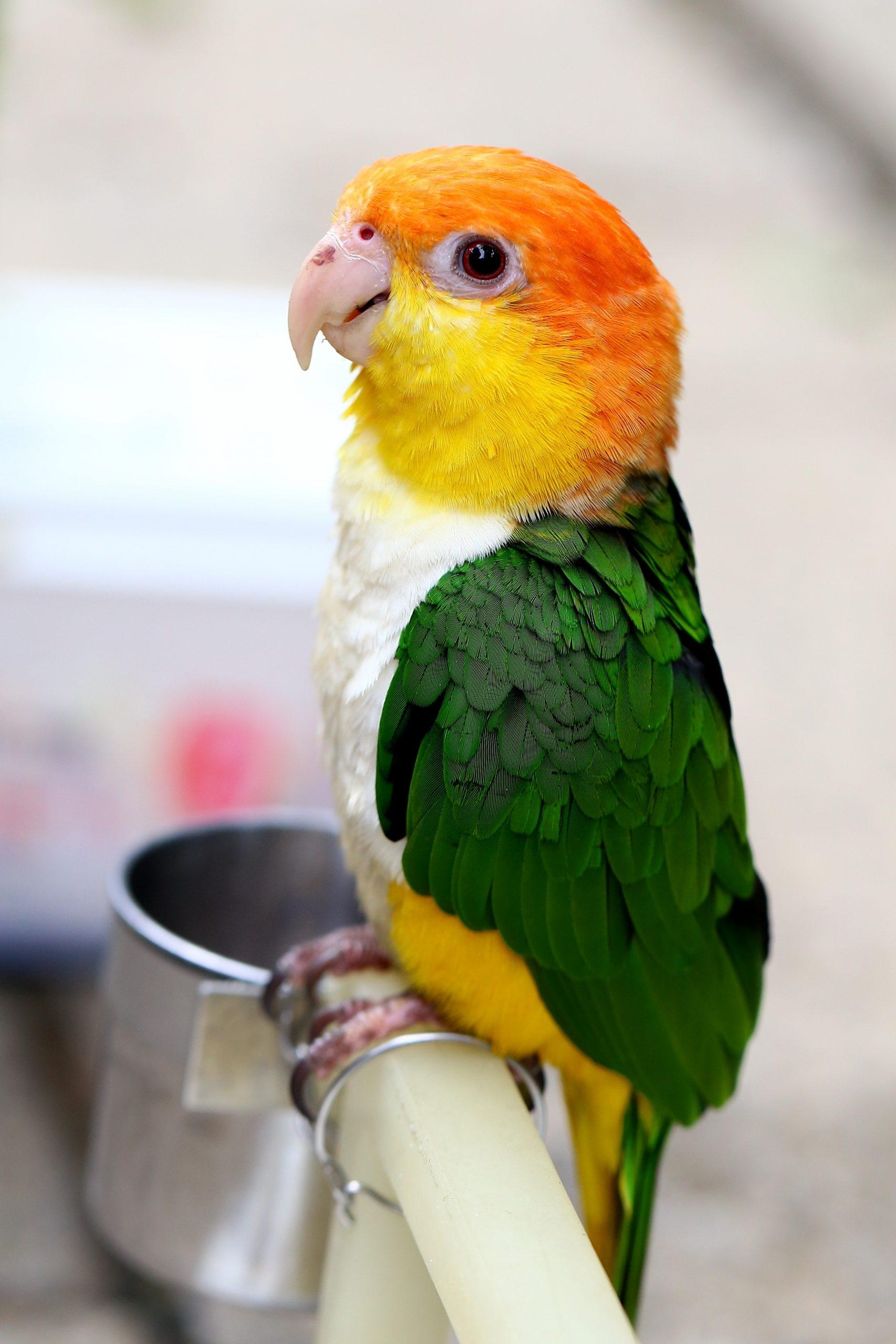 Different Bird Personalities