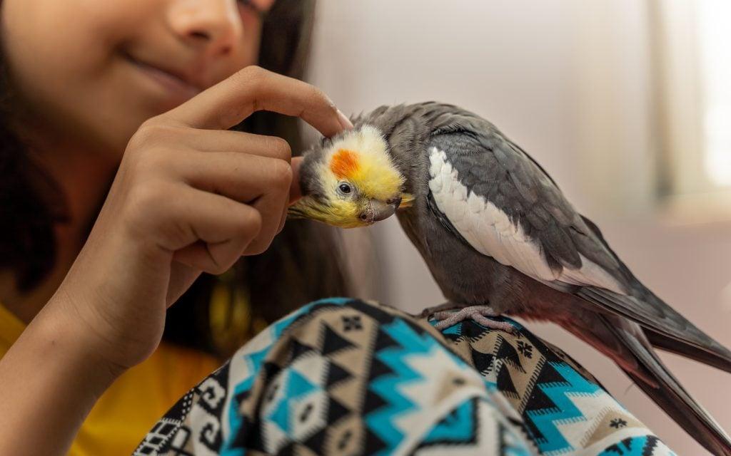 Raising Children and Pet Bird in the Same Houshold