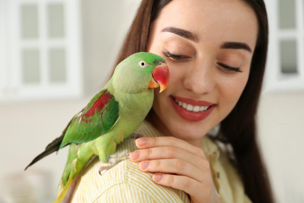 When to Adopt a Bird
