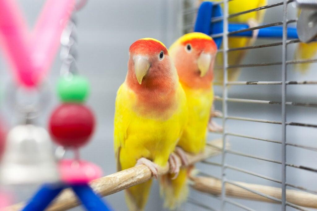 Does My Pet Bird Need a Friend