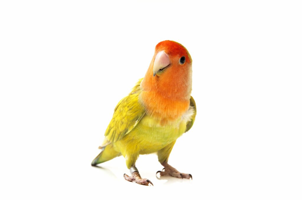 Hazards for Exotic Pets and Birds During Holidays